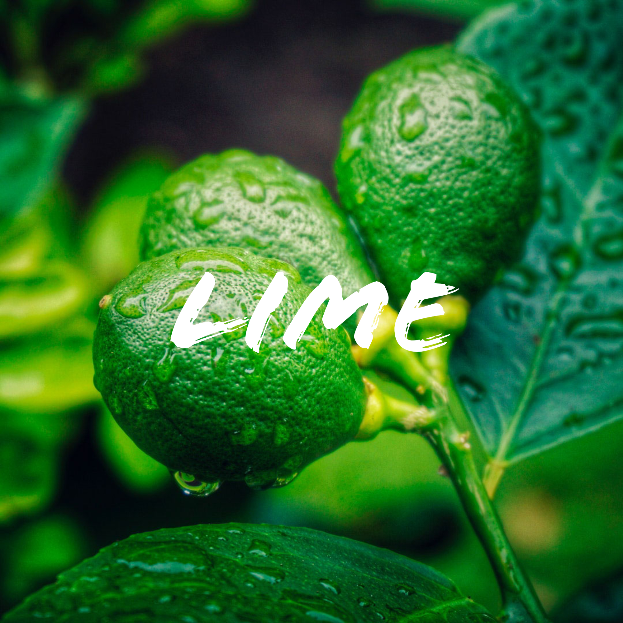 Lime_ Green.jpg