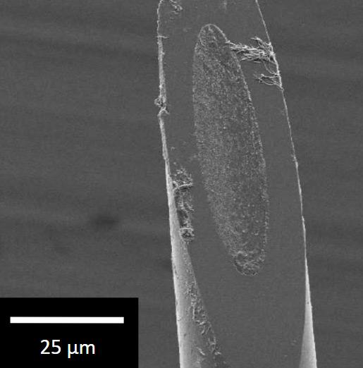 carbon-nanotube-electrodes-b.jpg