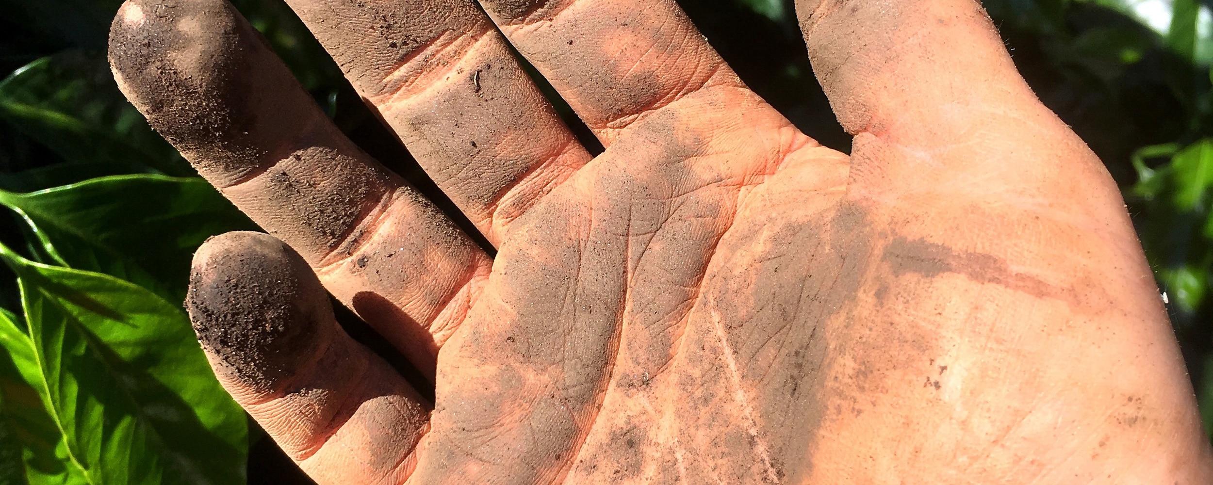 soil-header.jpg
