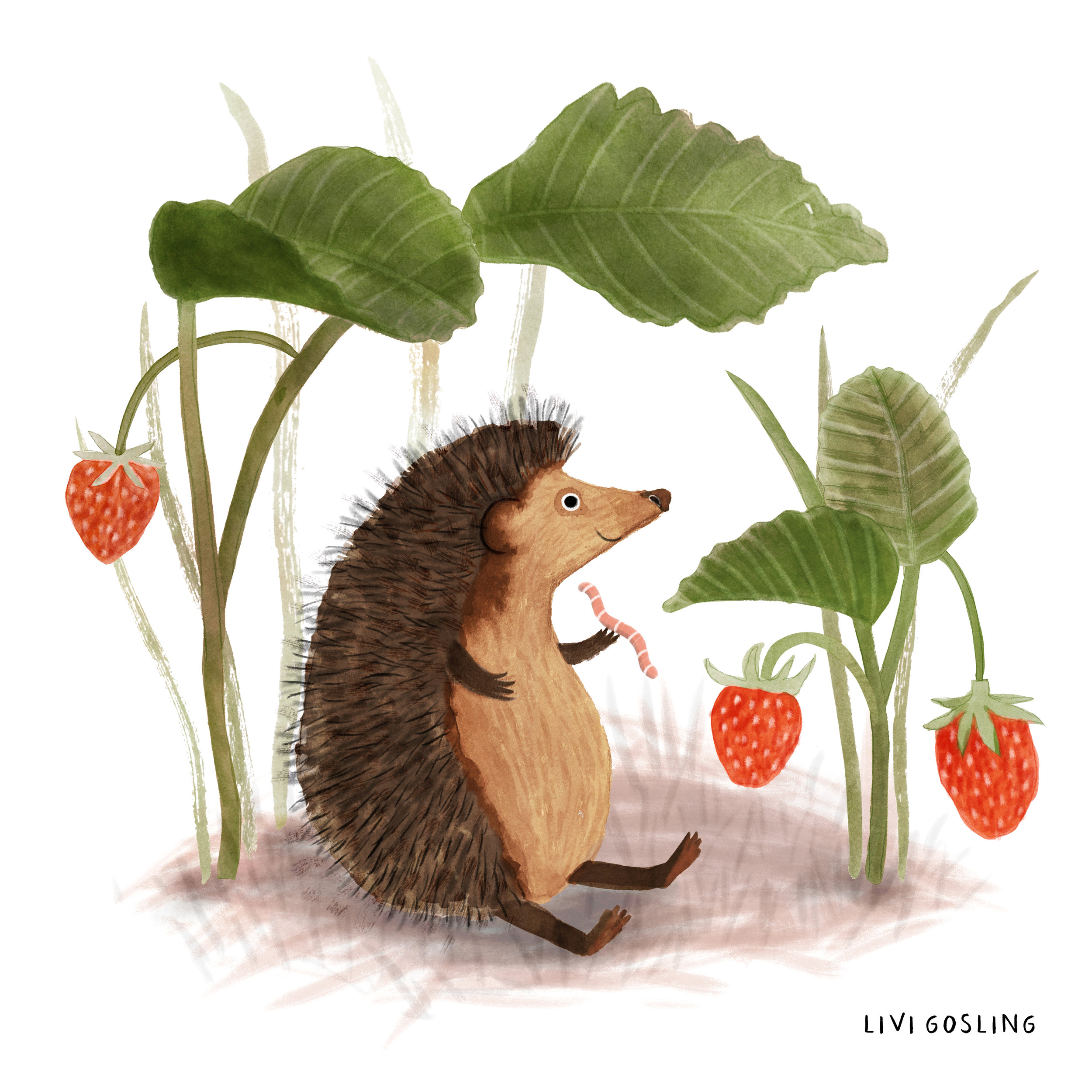 Hedgehog colour.jpg