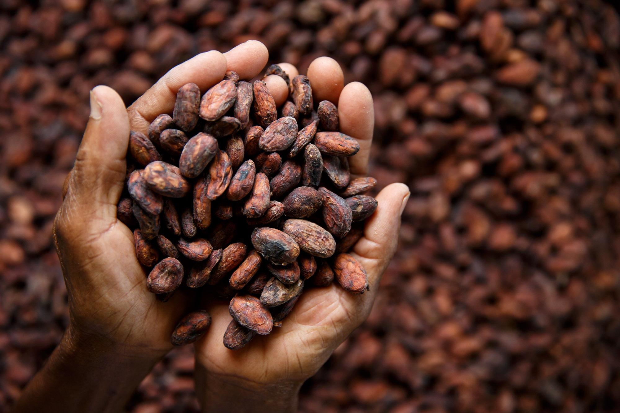 GRENADA - MARINE CONSERVATION, ORGANIC CHOCOLATE…AND RUM