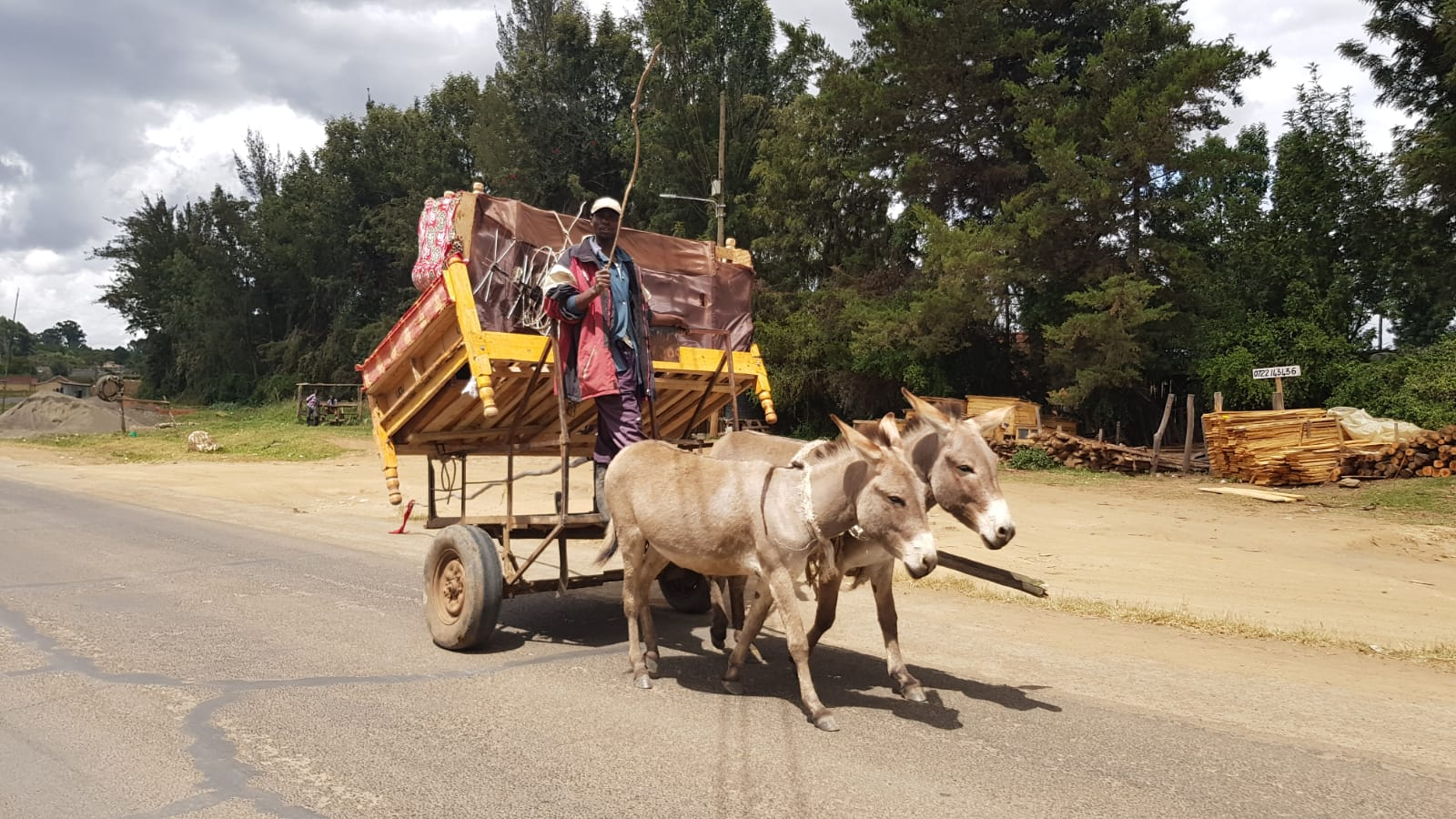 Donkey cart.JPG