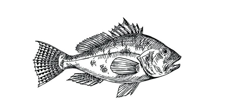 black sea bass.jpg