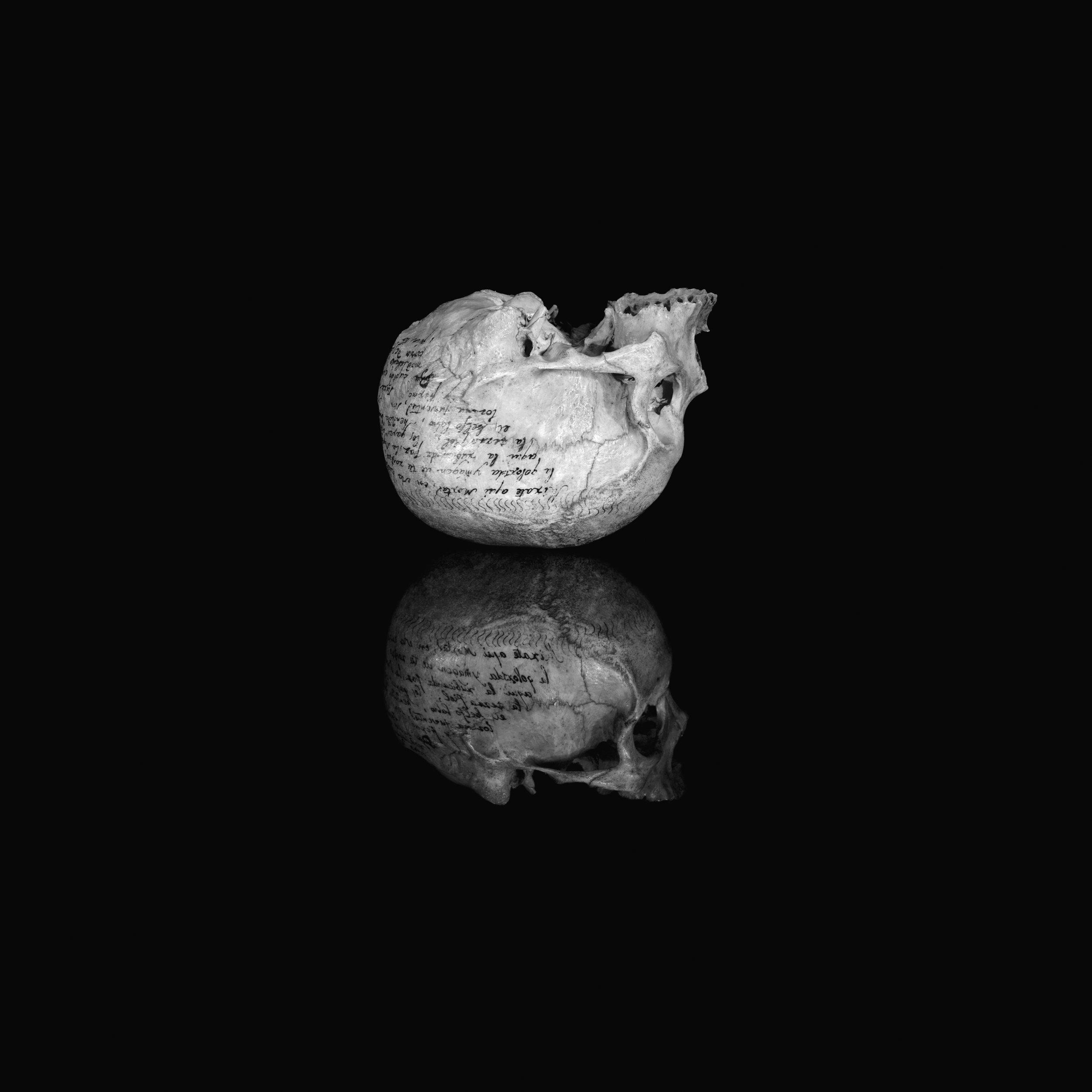 Vanitas 11 de la serie en proceso Extraordinary Objects,  2009-13