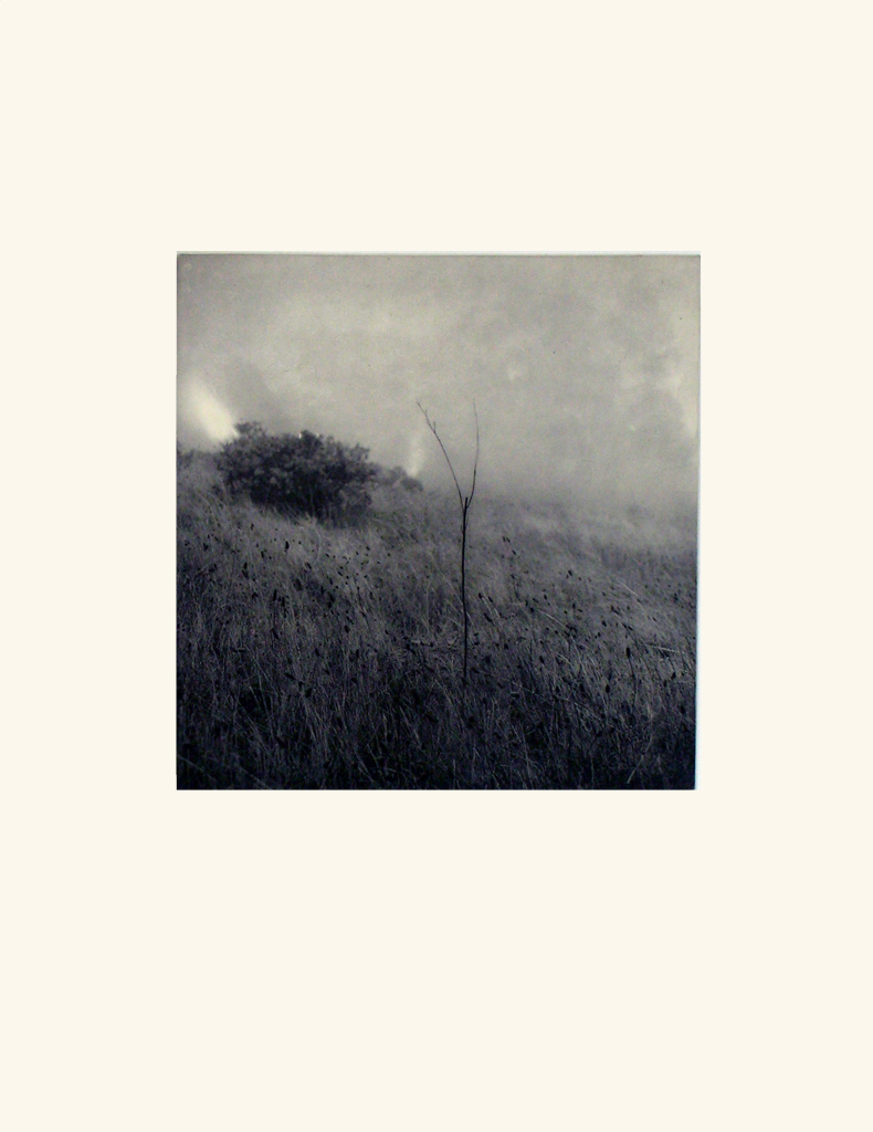 Grass in the Fog,  2001
