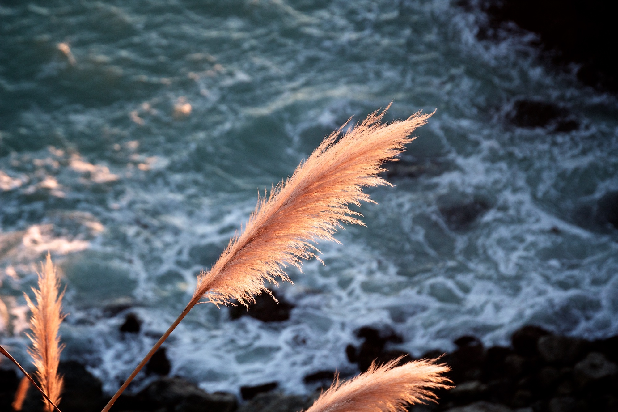 Feathery grasses in foreground above a rocky shoreline. Overcome feelings of anxiety and fear.