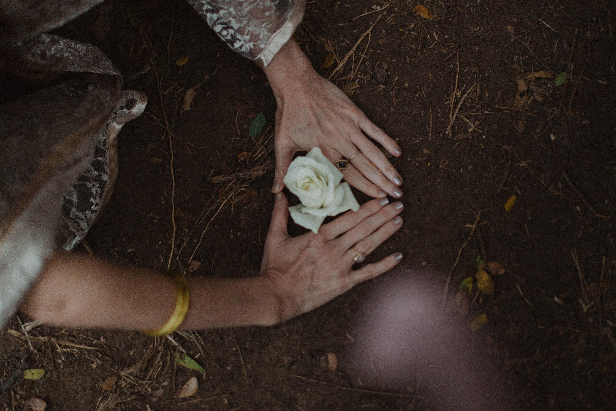 achintya-ameya-roses-8773.jpg