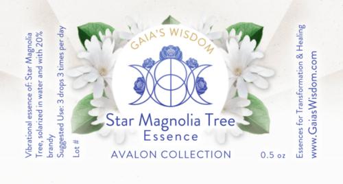 star-magnolia-500x268.png