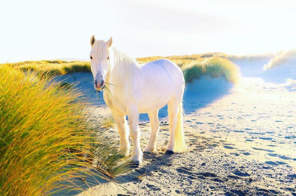 Luskintyre Pony