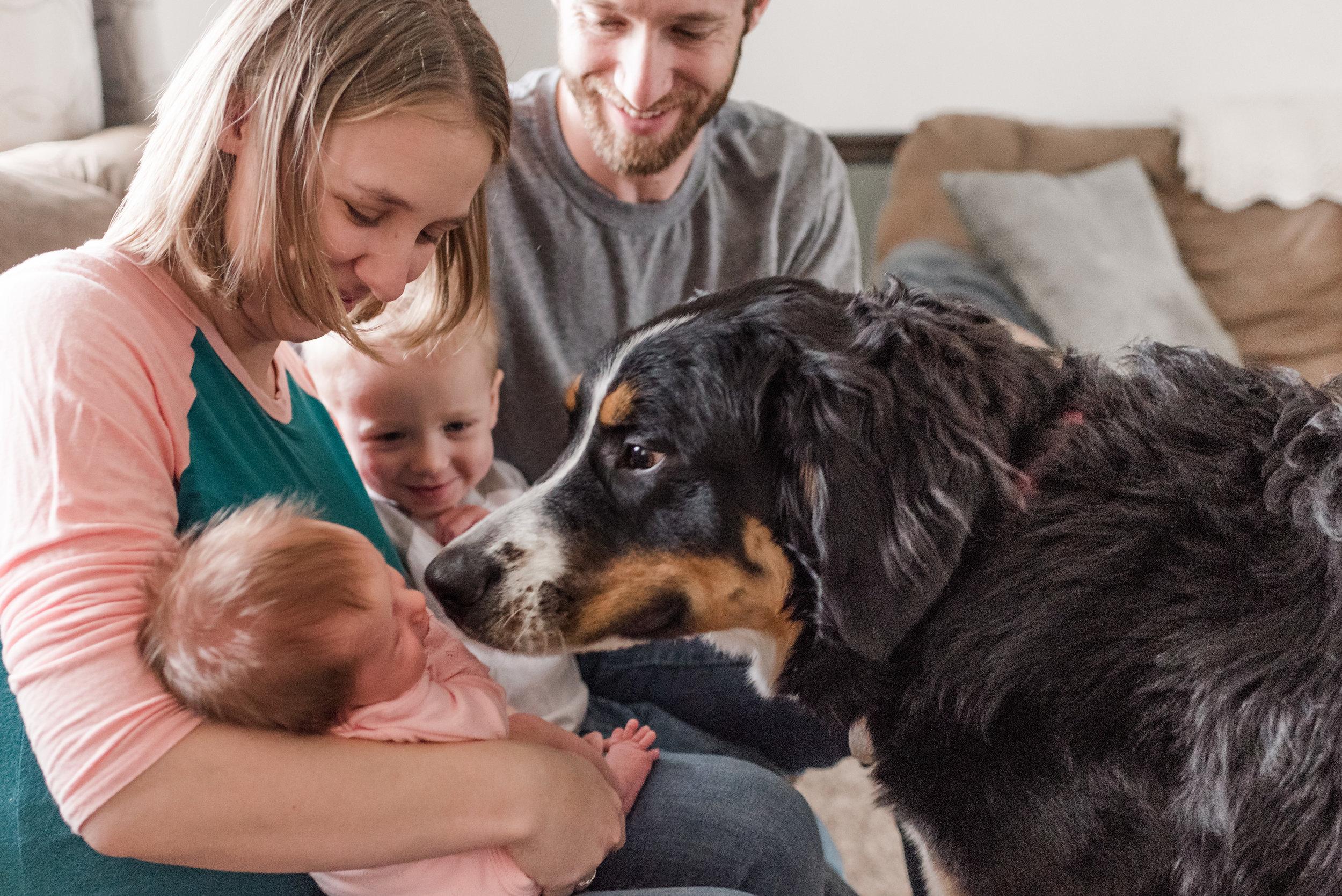 christi-stoner-photography-lancaster-pa-dog-with-family
