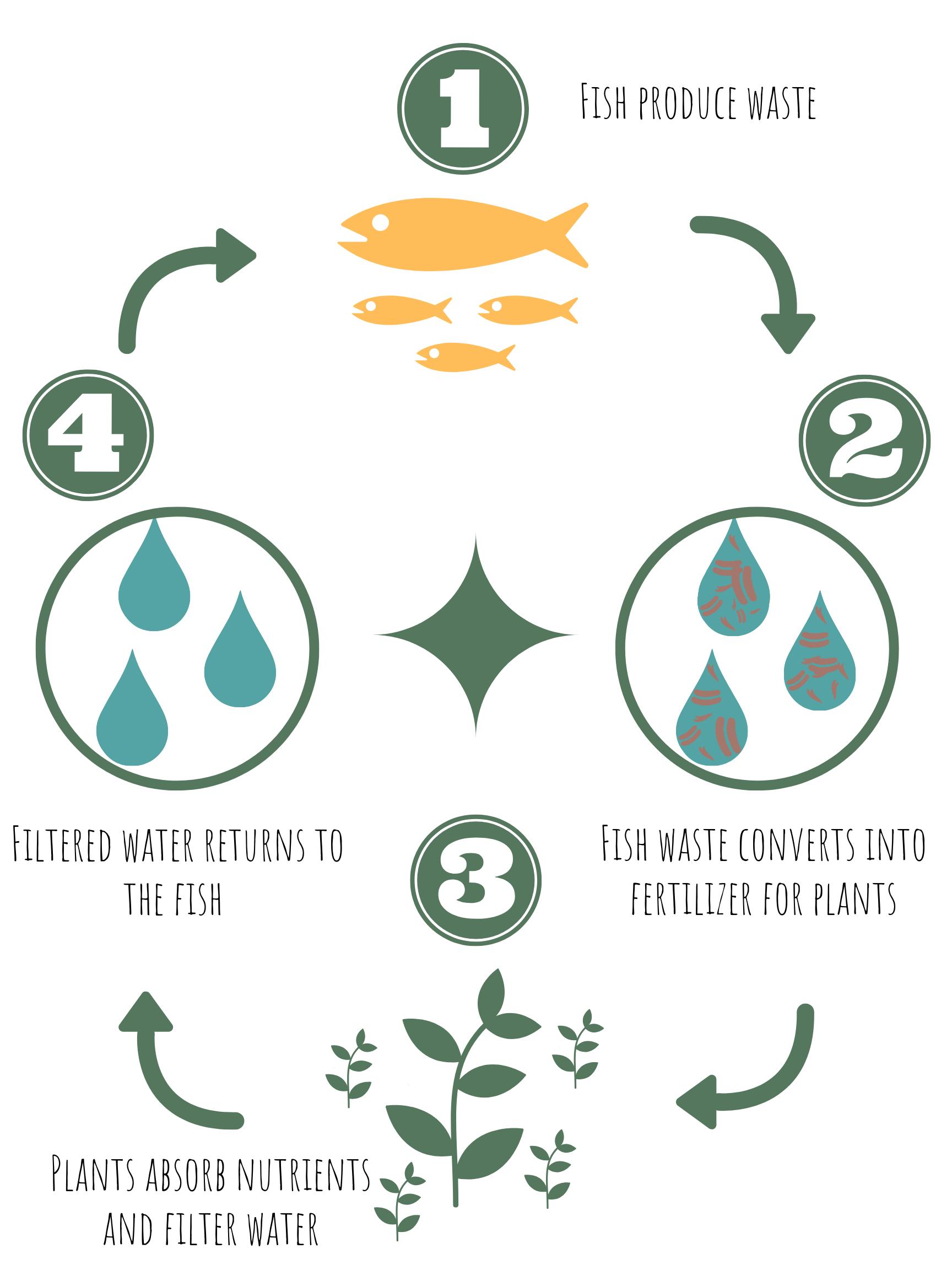 Aquaponics Process.png