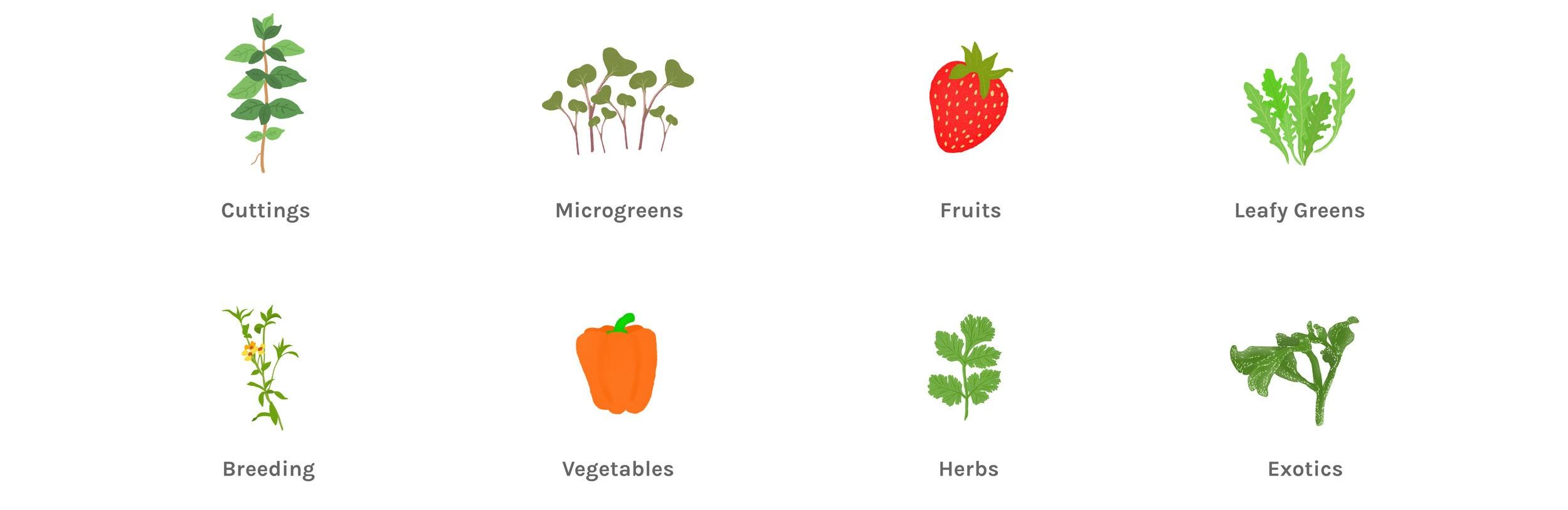 Plants+List+Graphic.jpg