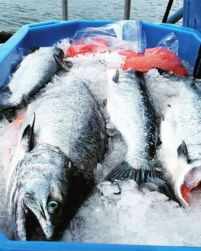 Yesterday was an exciting day! First load of fresh fish!!! 🐟🐟🐟 I drove out to the end of the road with the skiff and met Pete on the water to pick up the fresh fish while he turned and went right back out to the next opener. Got a nice mixture of Kings, Sockeye, Coho, Keta and Pinks! I got them all packaged up and dropped them off today at @alaska_airlines and they are on their way to feed some happy hungry customers! #talkaboutknowingyoursupplychain ;) #doesntgetmuchfresherthanthis #knowwhereyourfoodcomesfrom #traceablefood #knowyourfisherman #eatfish #roe #freshroe #freshsalmon #naturesbounty #salmoniswhatsfordinner #omega3 #eatrightfeelright #keto #whole30 #paleo #fresh #alaskansalmon #fisherman #alaskanseafood #fromtheseatotheshore #smallscalefishing #qualityfood #thankful #supplychain