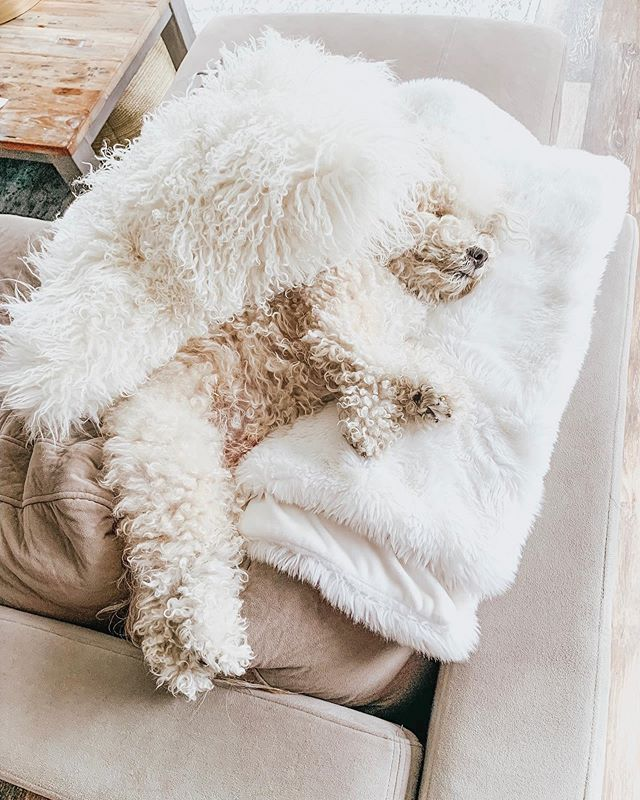 Starting the weekend off right!🤗 🐶 #tgif (no, I didn't put him like that lol) . . . #alyssaciffone  #beautyconcierge