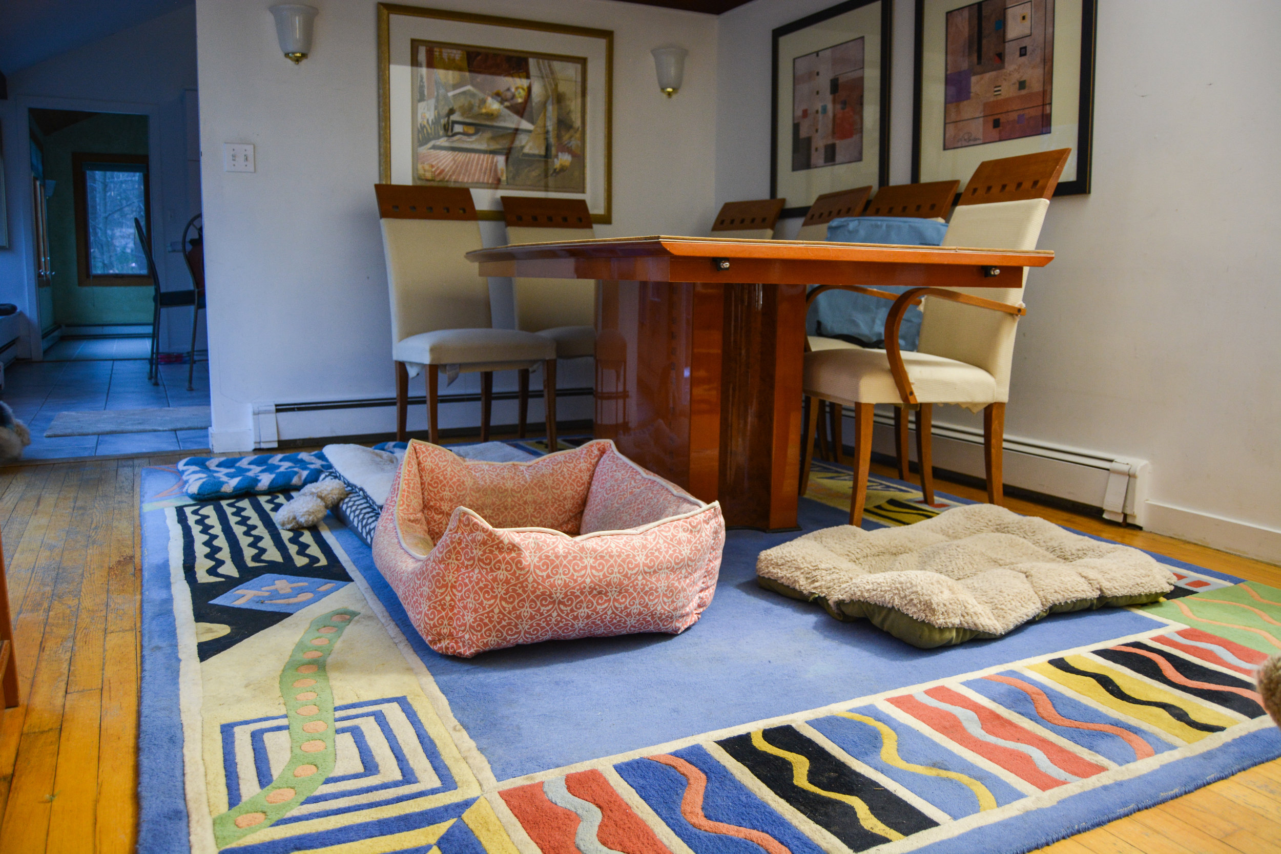 The dinning room is all about which bed your dog might find comfortable for the night.