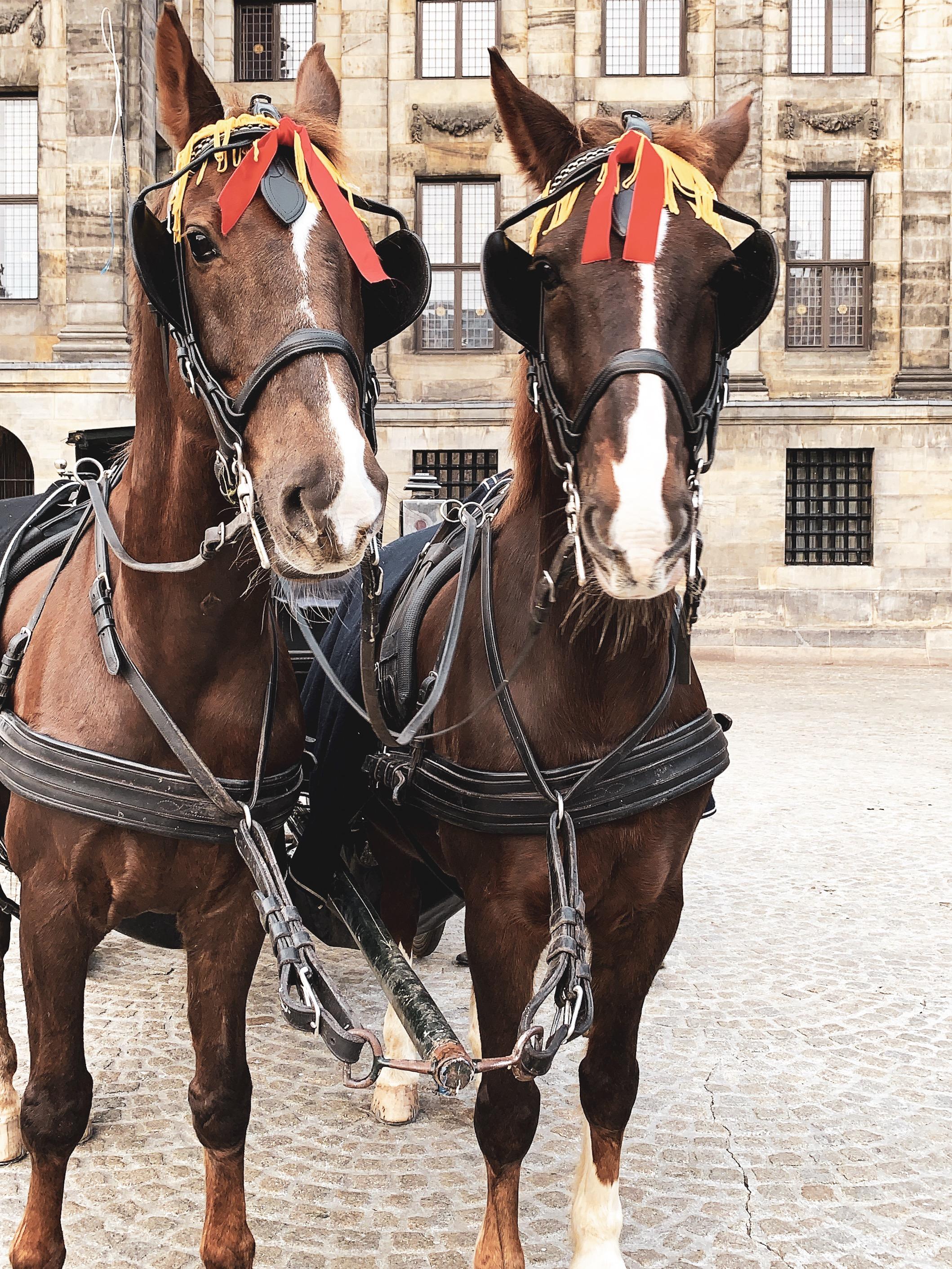 Koblenz 和 Quinn 頭上戴著漂亮的頭飾