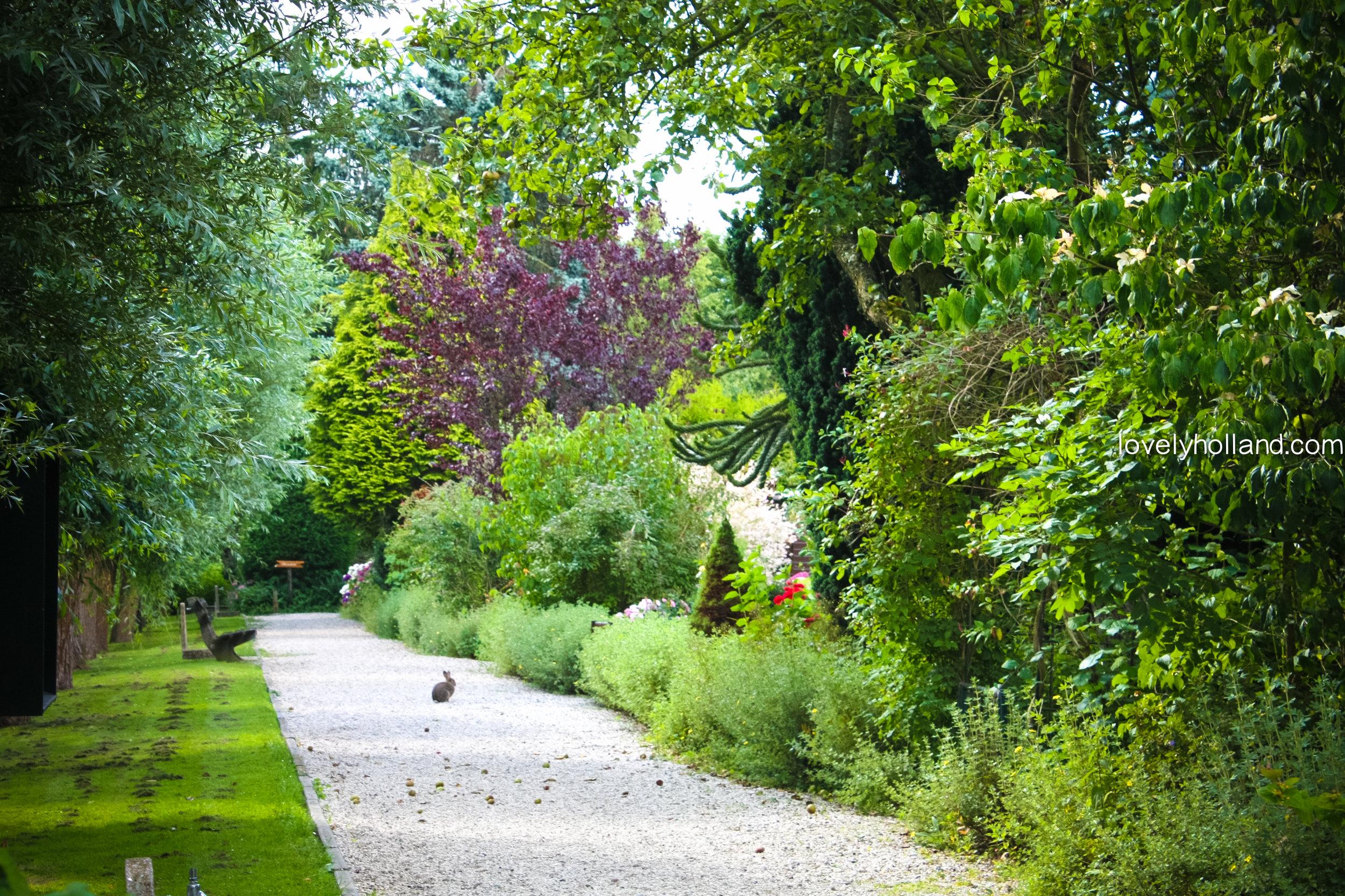 通往農圃的庭院深深小徑,剛好遇見野兔跳出來