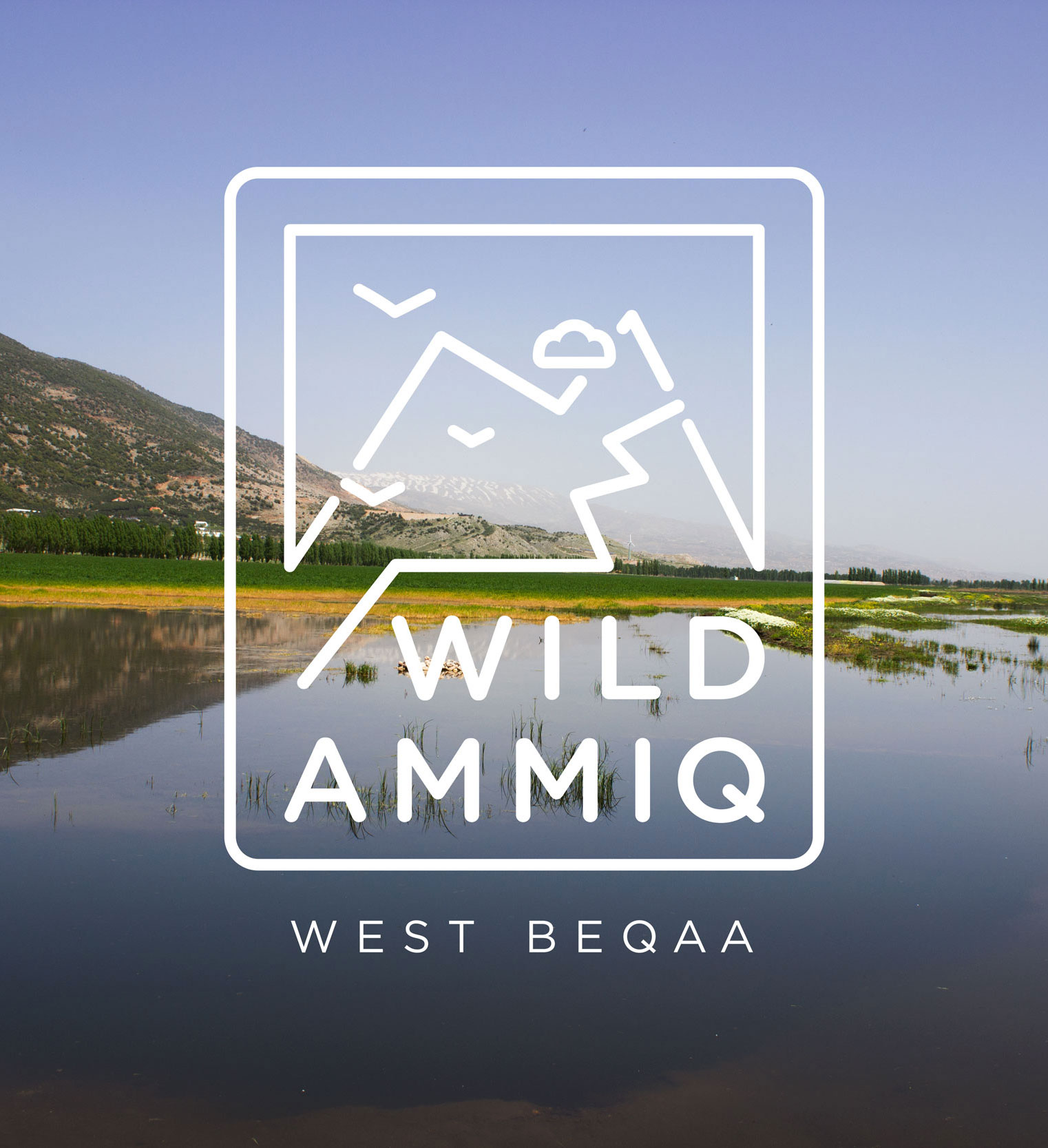 Wild Ammiq