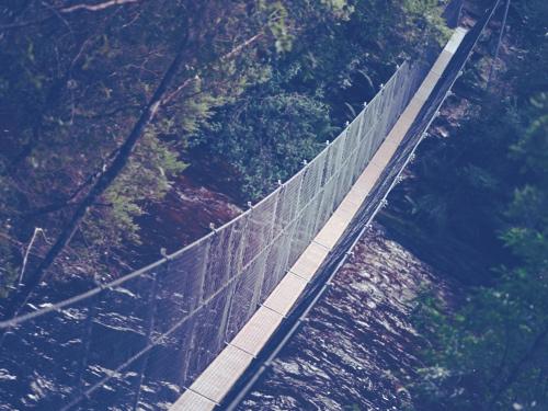 bro over juv.jpg
