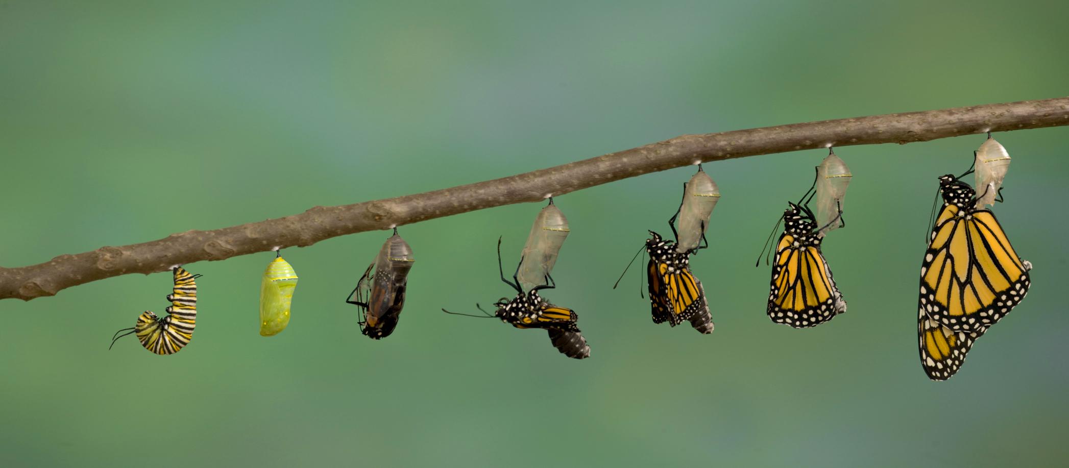 butterflies change.jpg
