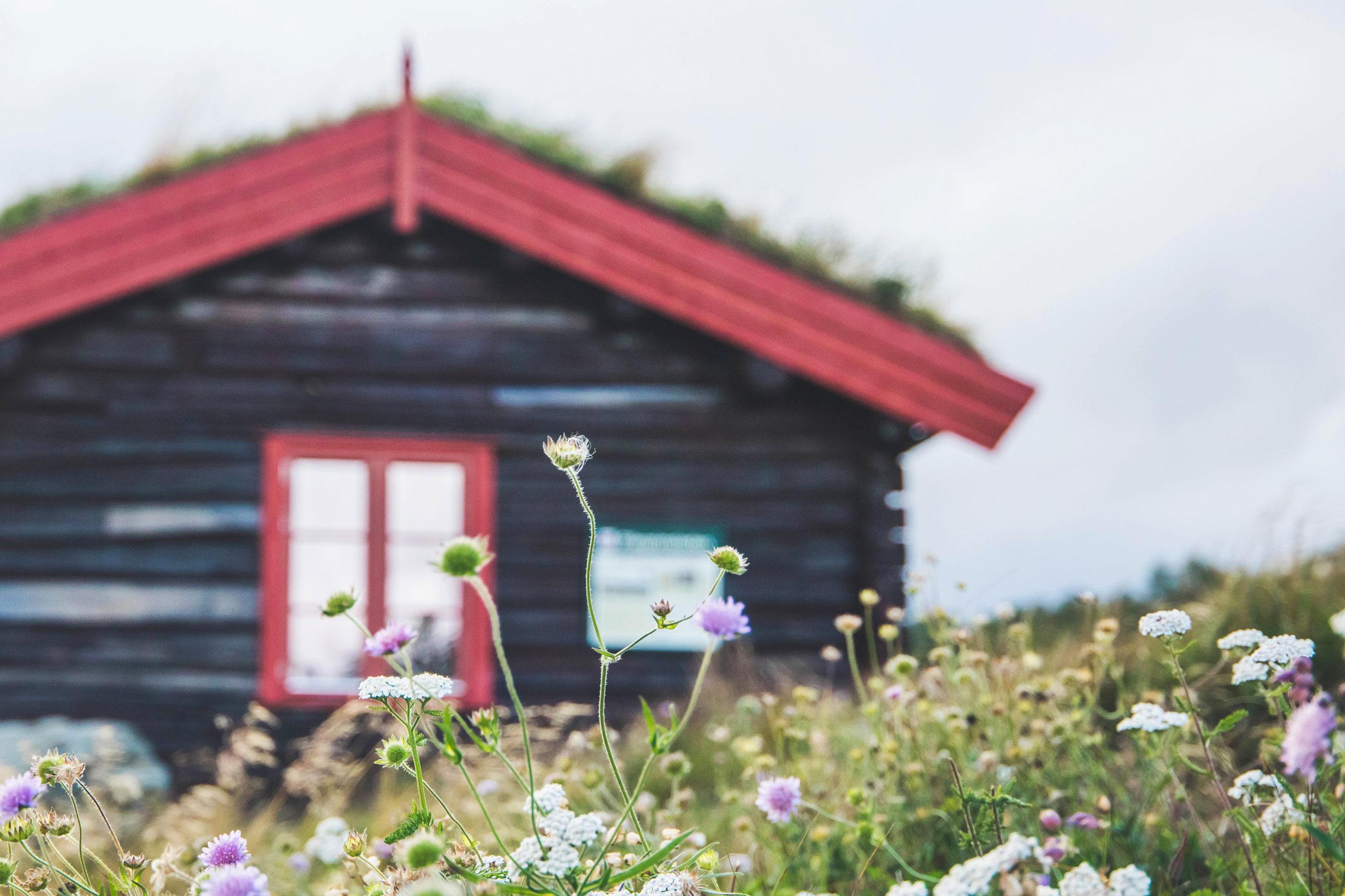 hjerkinn-fjellstue-og-fjellridning-71_web.jpg