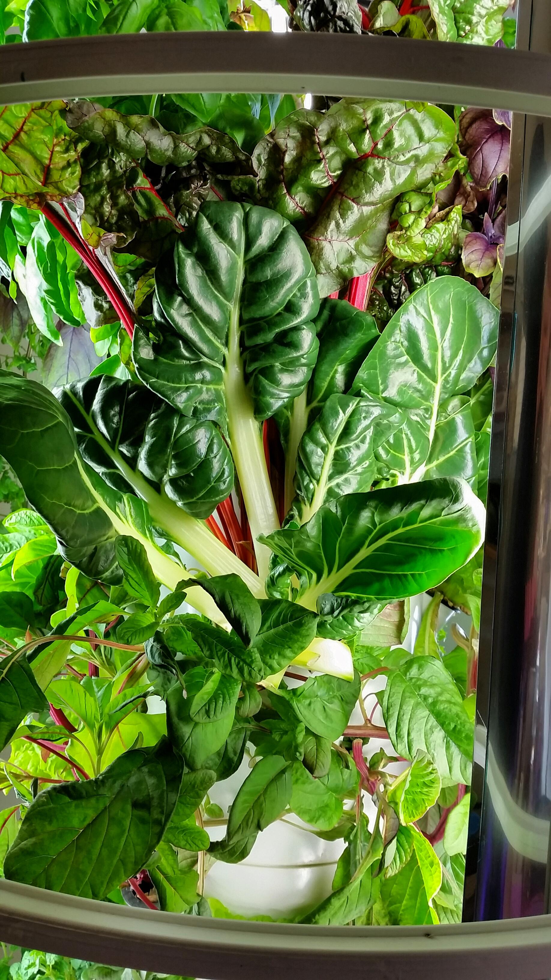 Tower Garden Vegetables Spinach.jpg