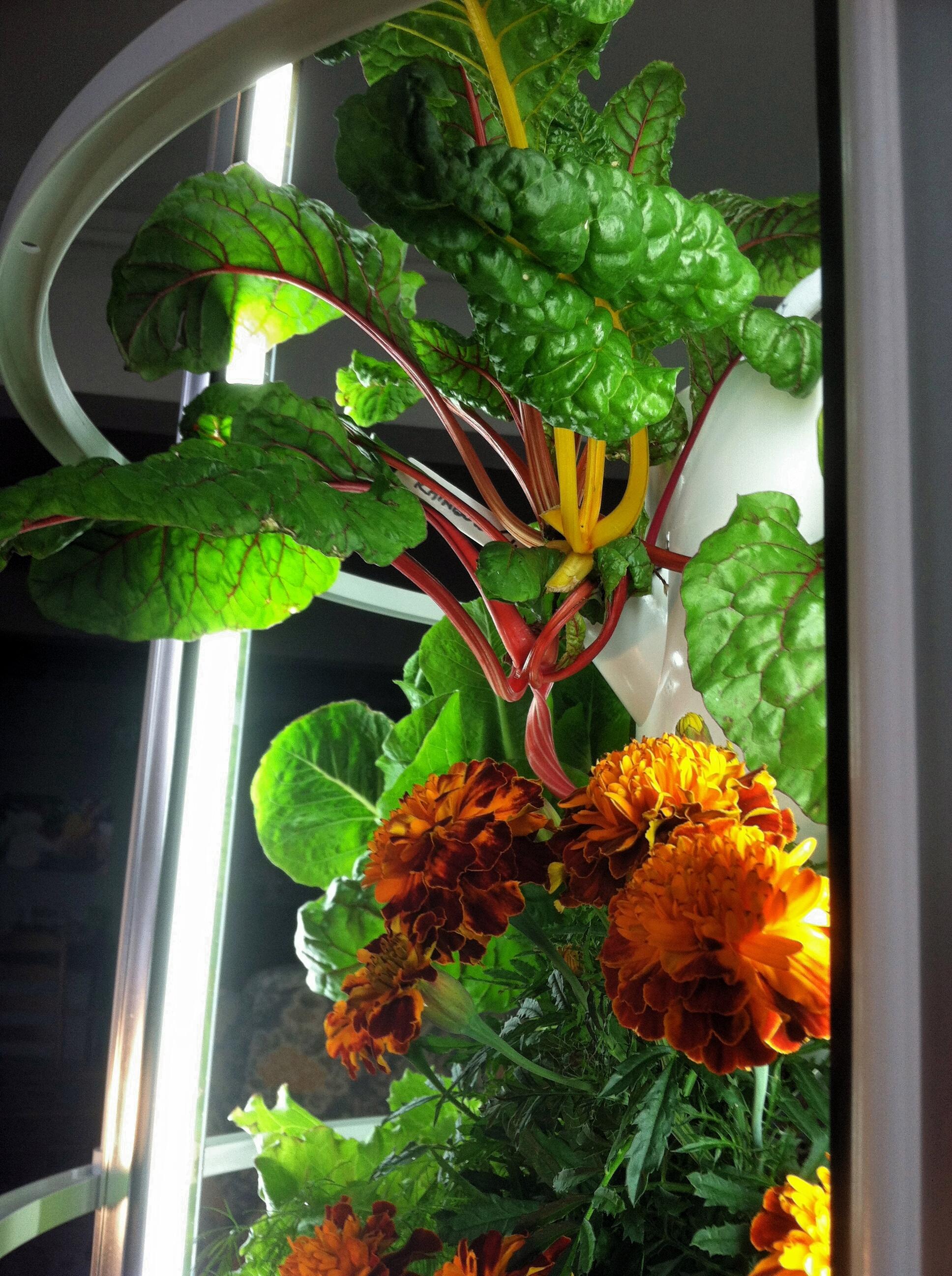 Tower Garden Vegetables Vine.jpg