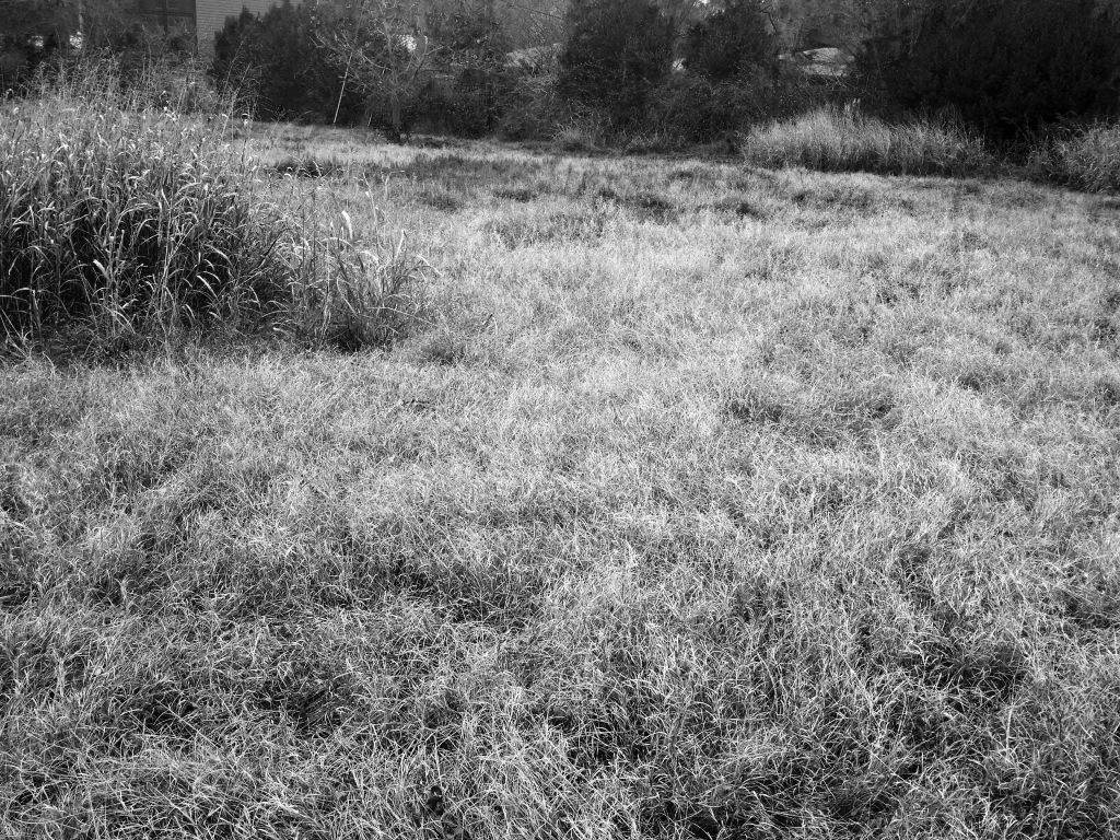 grass-small.jpg