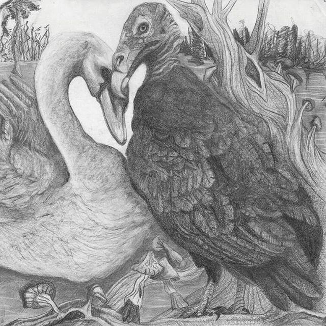 prints now available! three sizes to pick from: postcard (10x13cm), actual size (30.5x40.6cm), or poster (76×101.6cm) #serpentyl #lovers #magicrealism #graphite #drawing #swan #vulture #birds