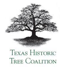 texas historic tree coalition.jpg