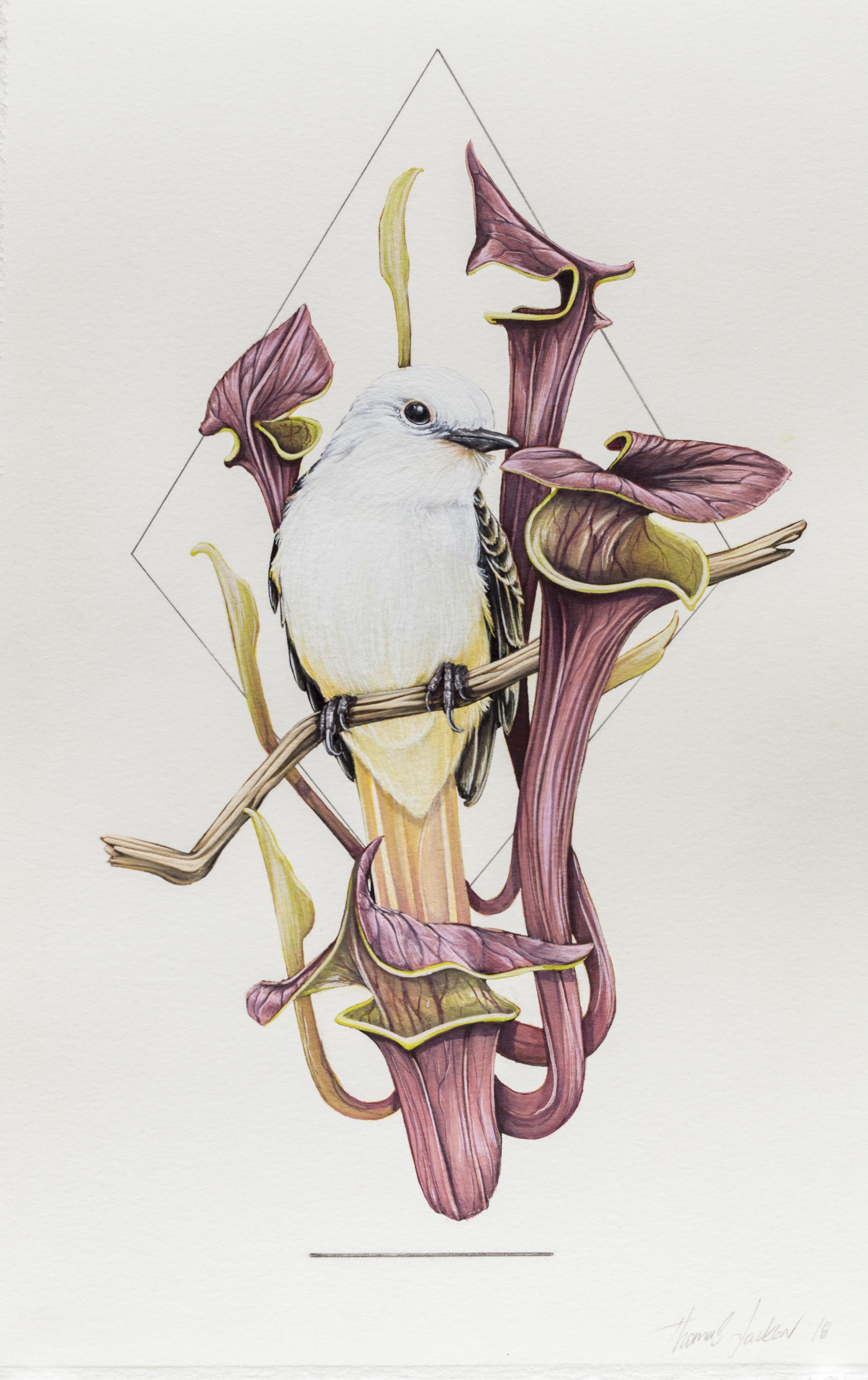 'Pitcher Plant'