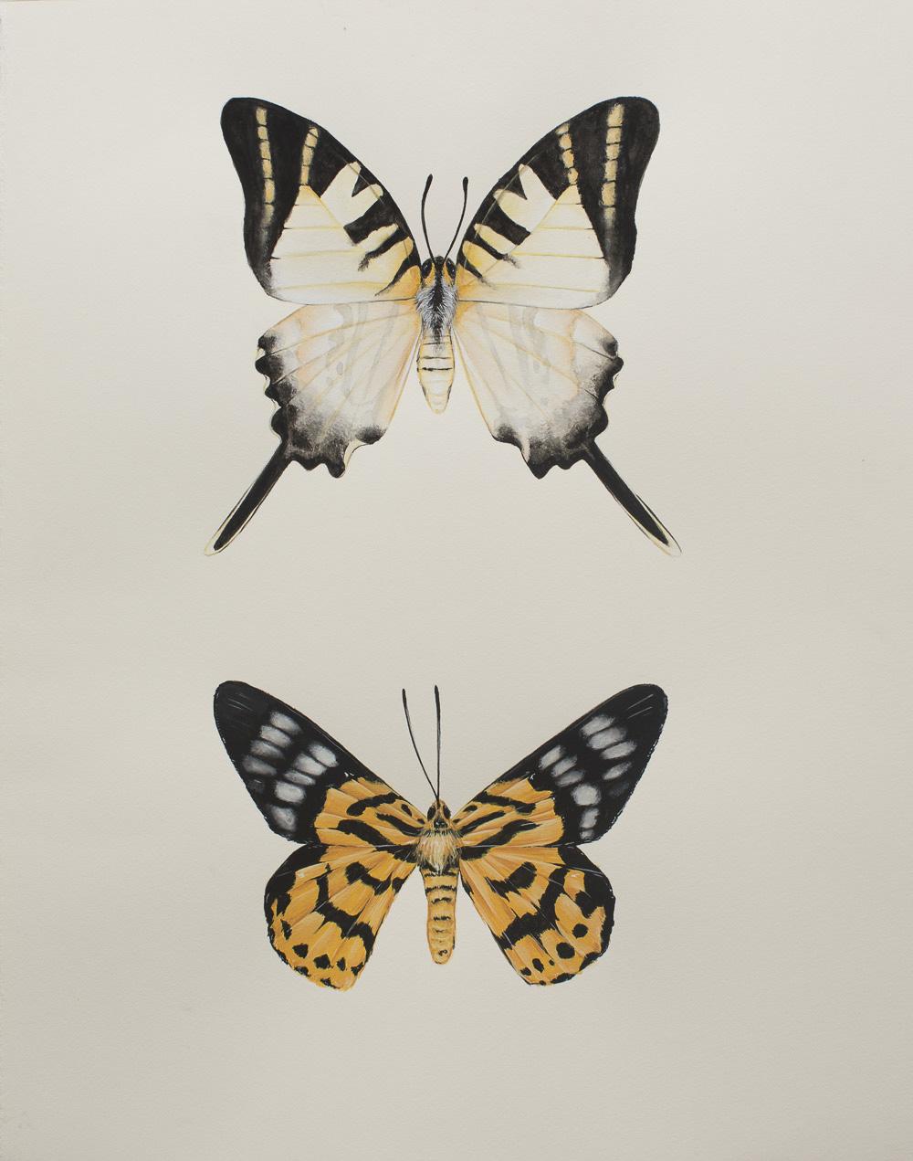 'Graphium-antiphates & Odina-decoratus'