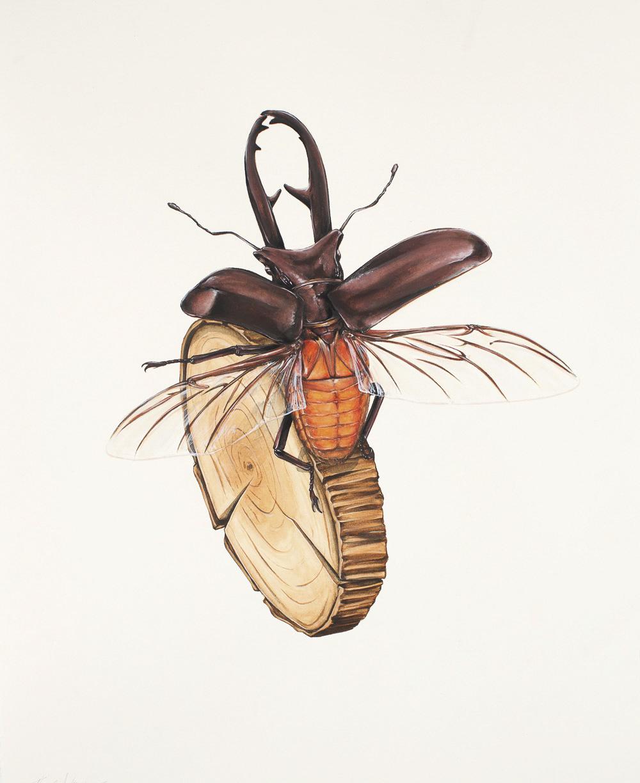 'Antler Beetle on Wood 1'