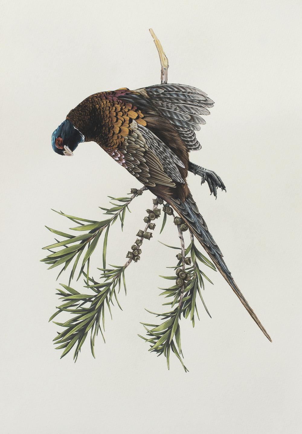 'Ornithology'