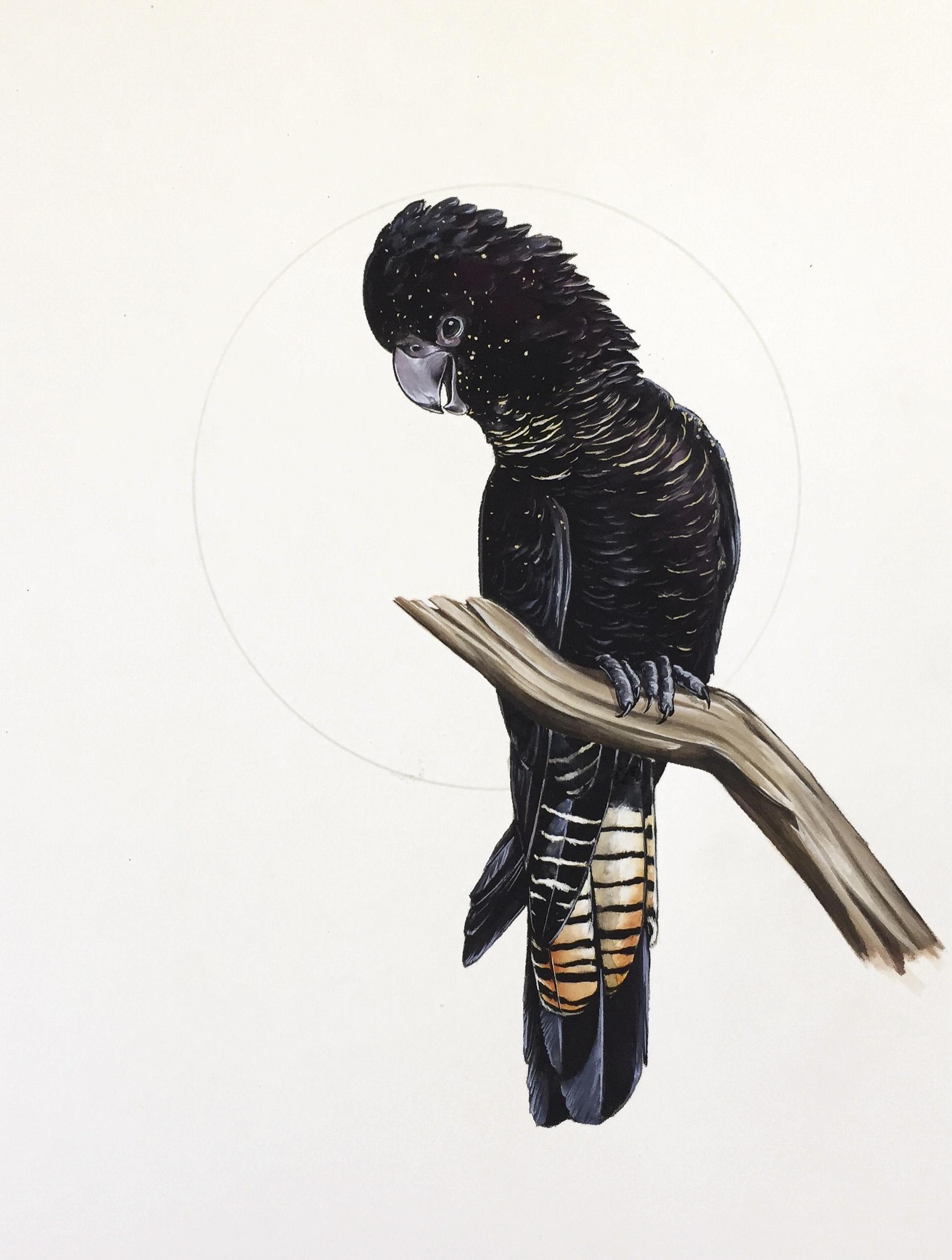 Black Cockatoo commission