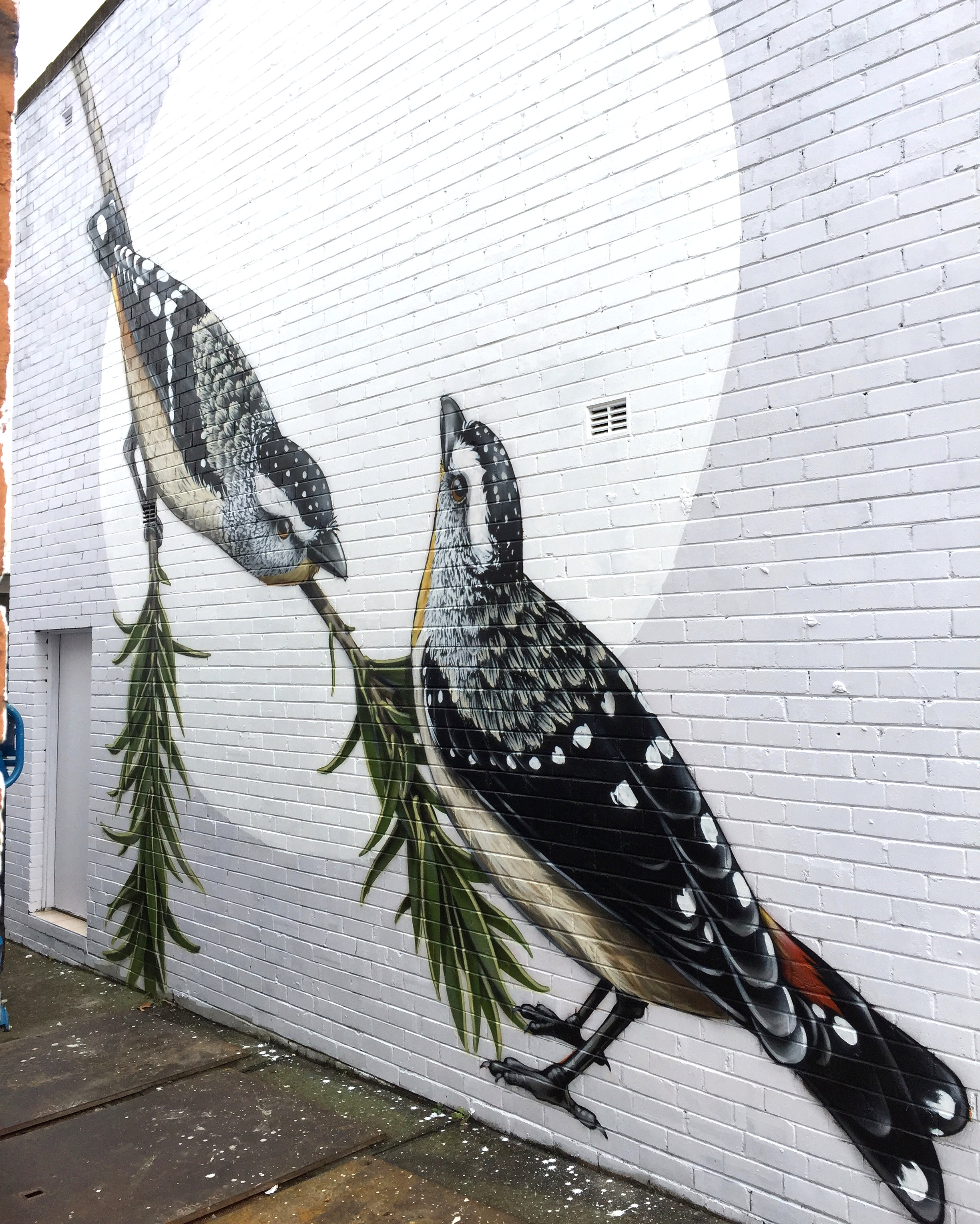 Spotted Pardalotes for Bankstown City Council