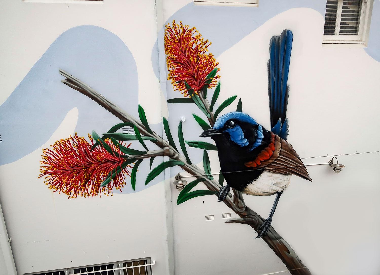 Blue Wren Windsor NSW