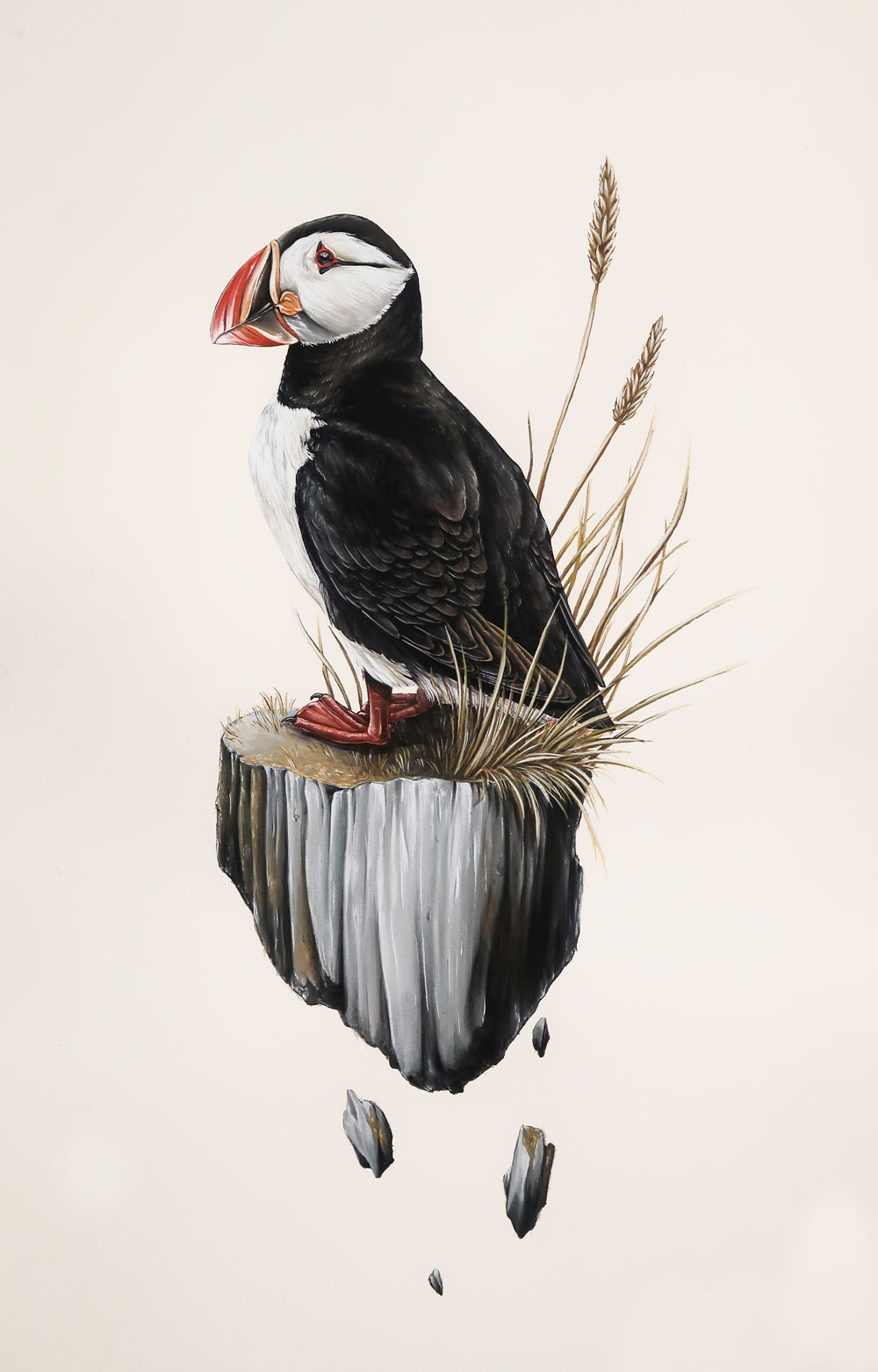Puffin, Grimsey Island, Iceland. A part of the 'Discovery' series of works.