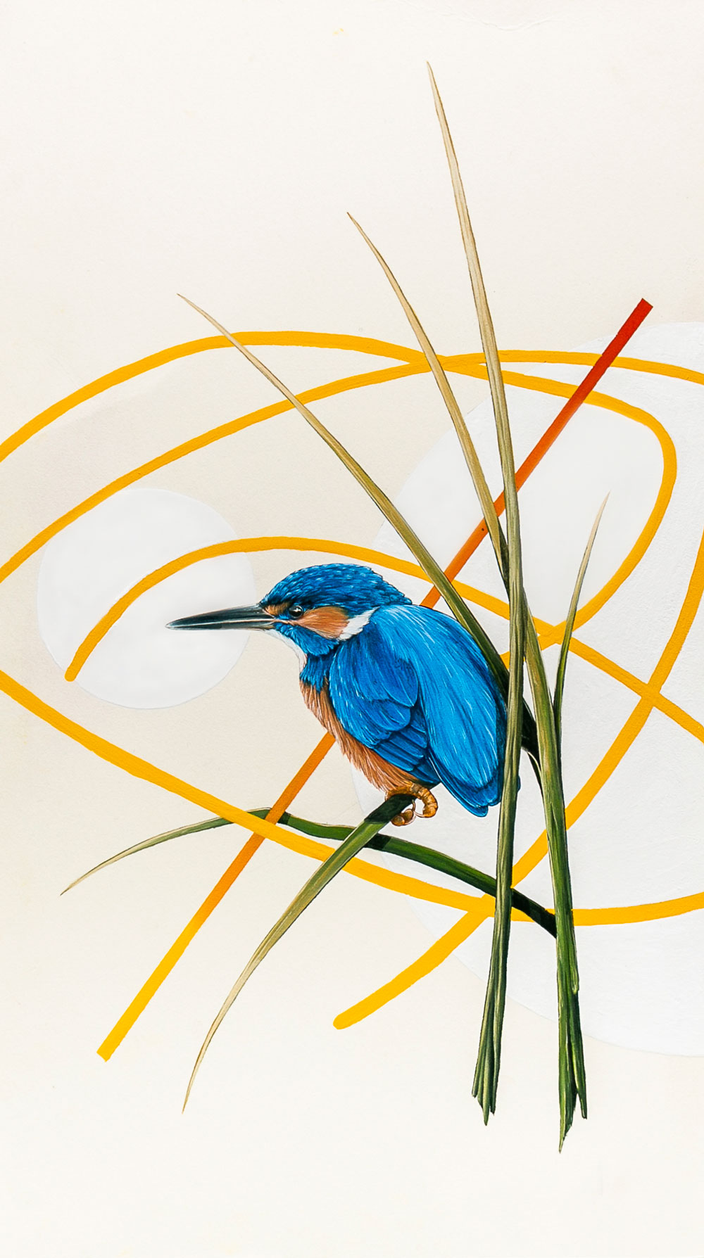 Kingfisher, Avon River, England. A part of the 'Discovery' series of works.