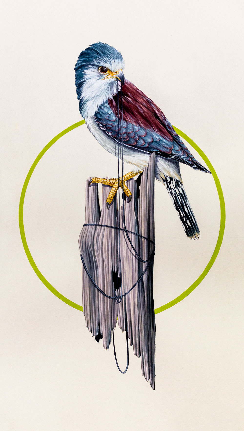 Pygmy falcon, Jurassic Cost, England. A part of the 'Discovery' series of works.