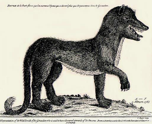 Artist's rendering of the Beast based on eye-witness accounts; Drawing done by A.F. of Alençon