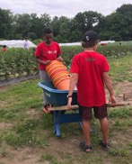 Interns bring the weeding buckets to the eggplant beds
