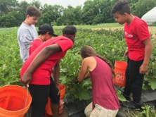 Farmer Hannah shows CitySprouts youth the notorious flea beetles nest in the eggplant bed