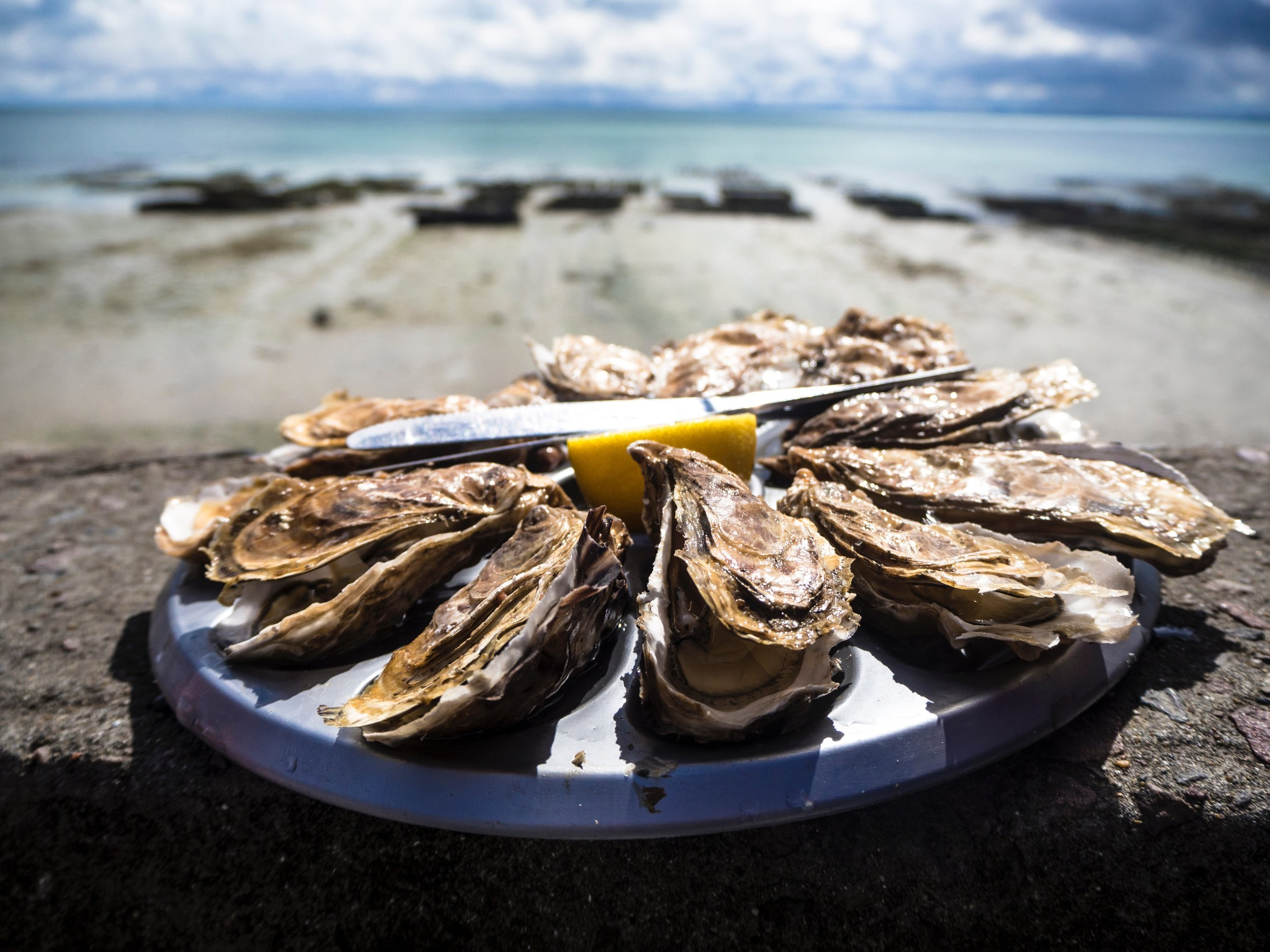 oysters in cancale brittany france