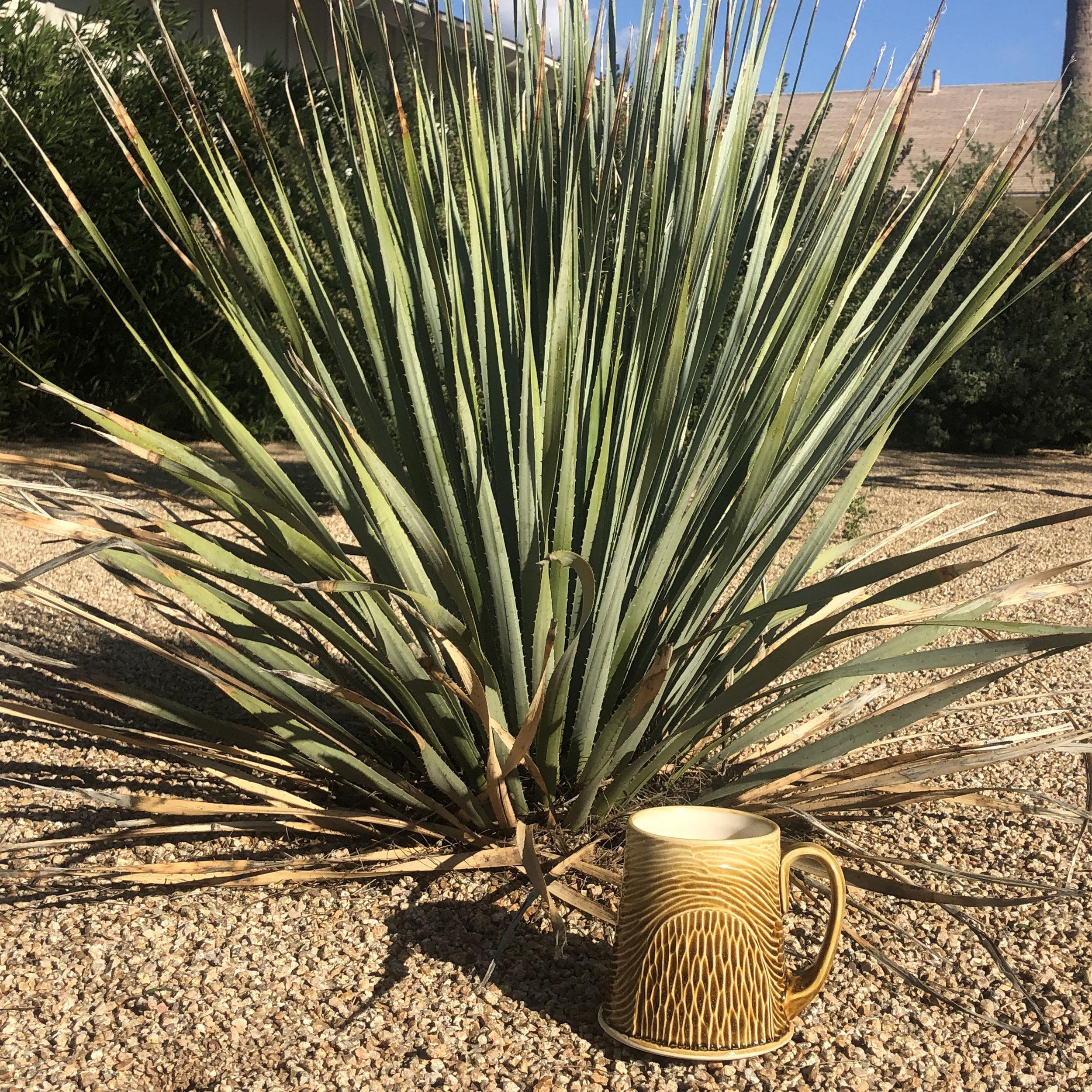 Arizona mug 2.jpg