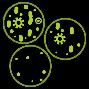 Bacterium-plates.png