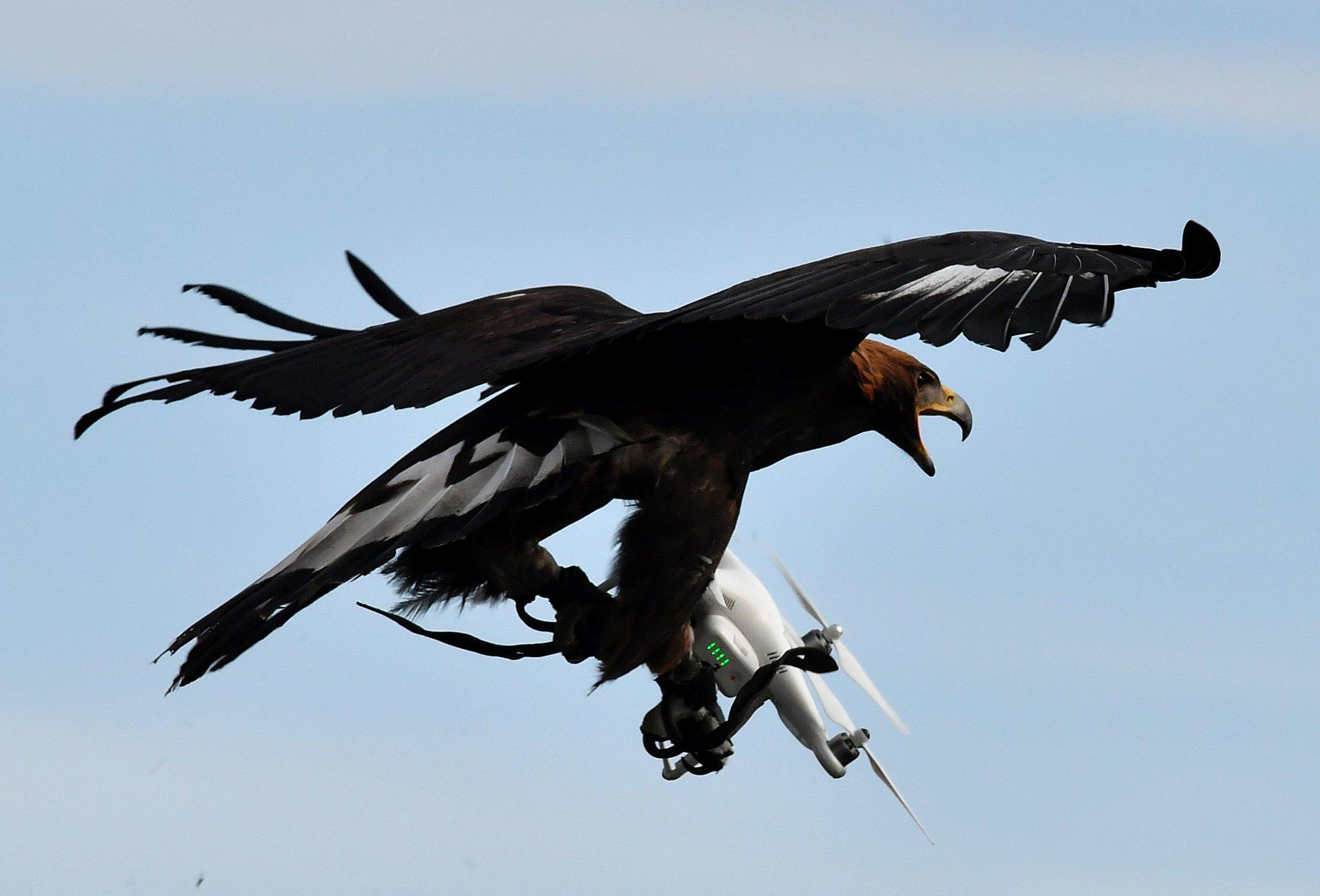 HAWK_DRONE.jpg
