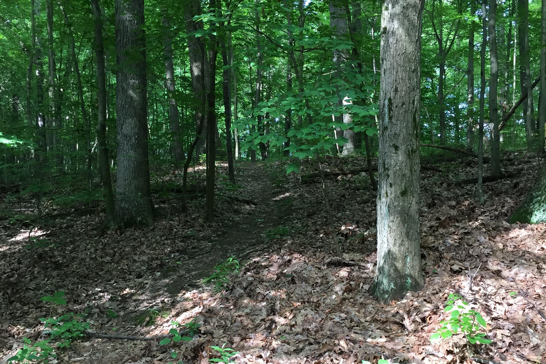 walk-in-woods-path-IMG_3171.jpg