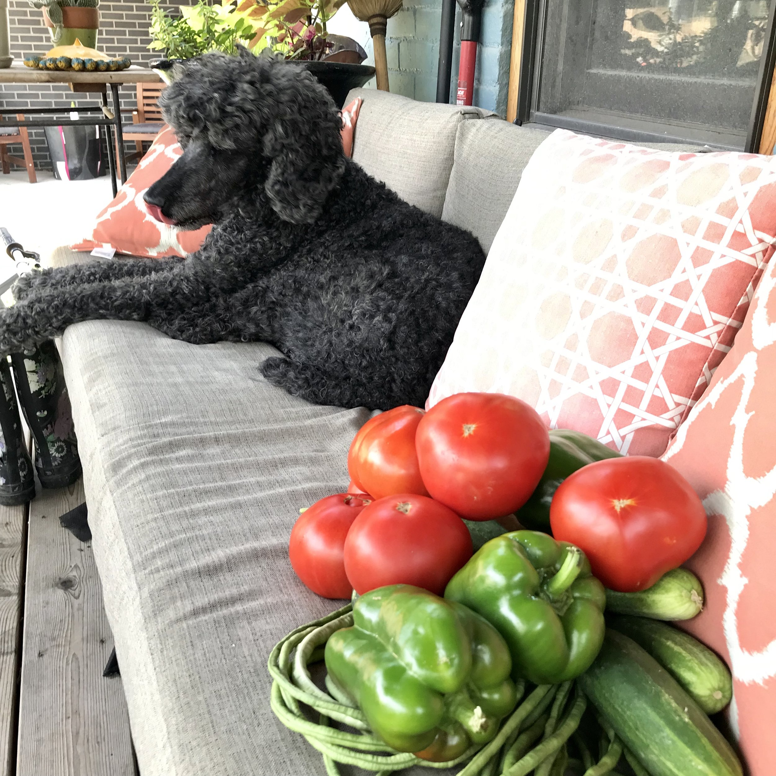 Oscar overseeing the gazpacho ingredients.