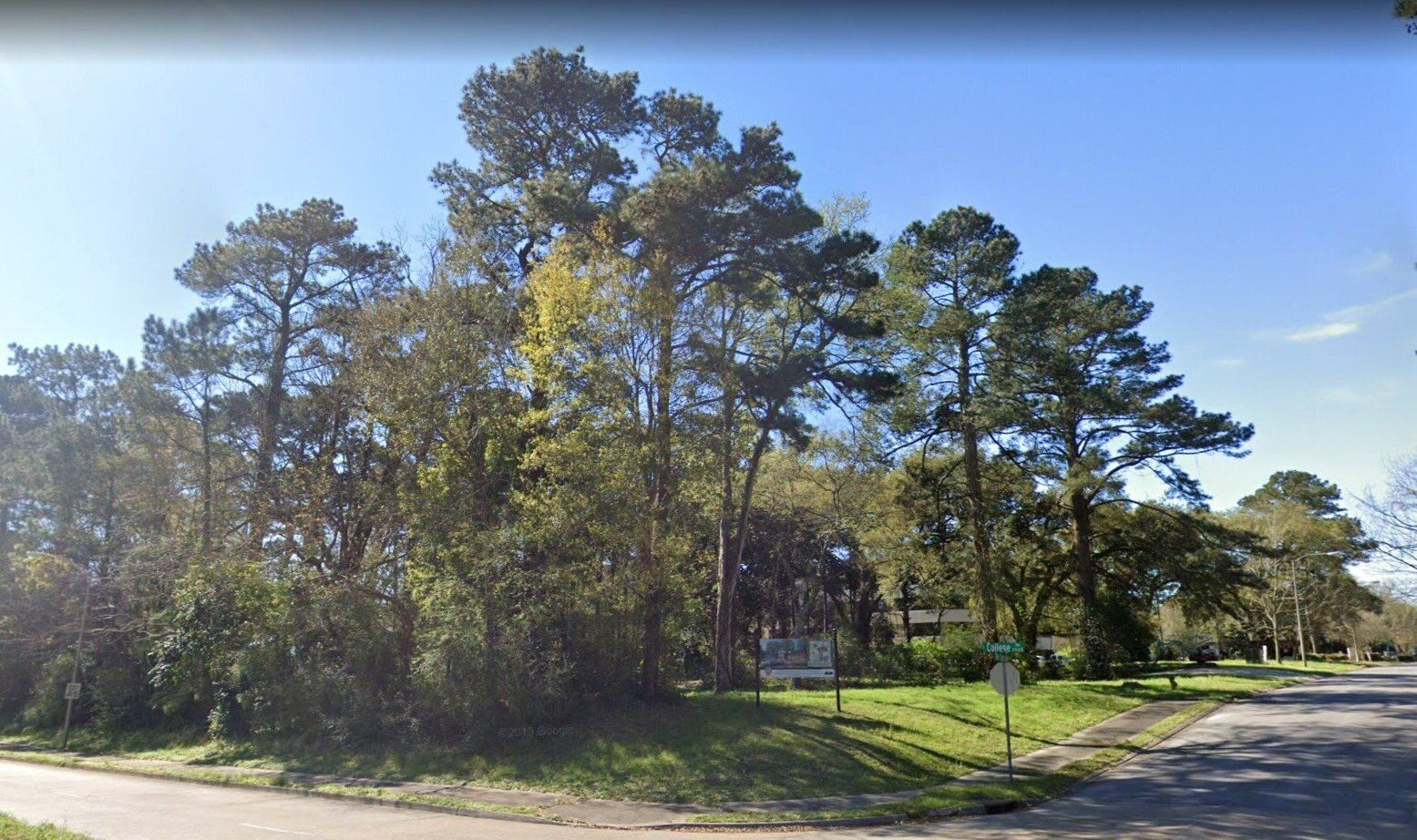 A view of the Iberville Grove project site before work began. Here you see the dense tree coverage and the topographic relief of the site.